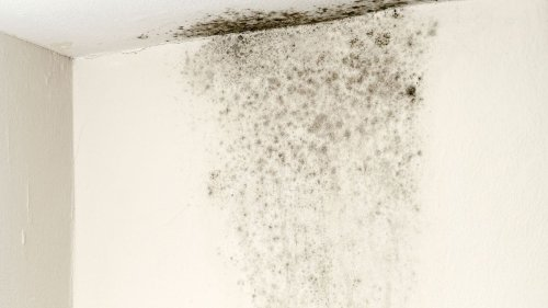 How Bad Is Black Mold, Really?