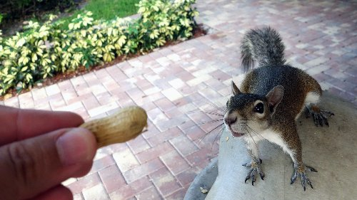 The Great Squirrel Debate: To Feed or Not to Feed?