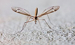 4 Tips for Backyard Mosquito Control