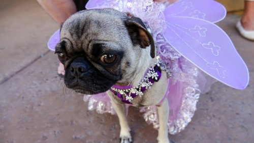 Dressed Up, Photographed and More: How Does Your Dog Feel About All of That?