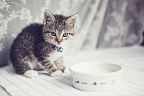 Is It OK for Cats to Drink Milk?