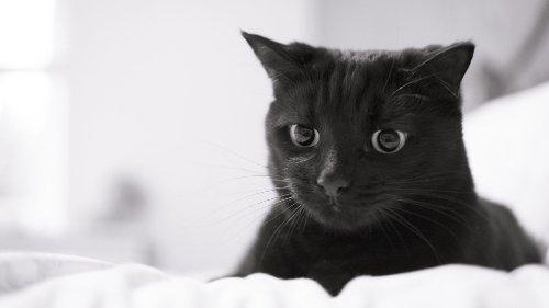 Nikola Tesla's Cat and Other Feline Fascinations