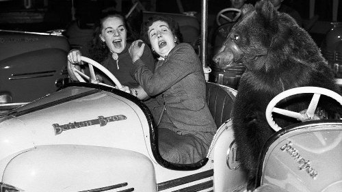 Why Humans Scream, Make Crazy Faces When Terrified