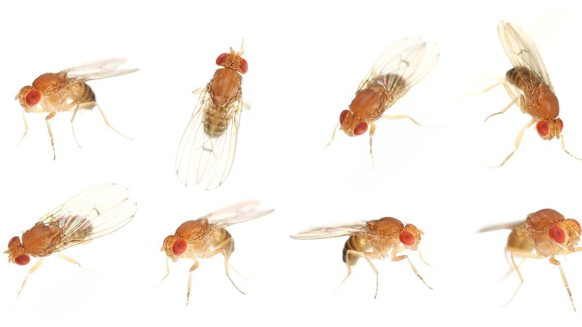 Why Does My Home Become Infested with Gnats in the Summer?