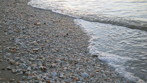 Where Have All the Seashells Gone?