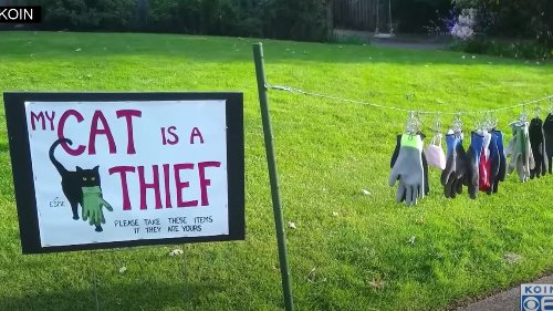 Woman Creates Purrfect Sign To Warn Neighbors Of Thieving Cat