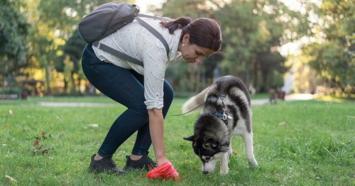 Six of the most common dog poo questions have been answered