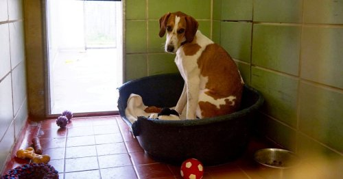 Britain's loneliest dog still in animal centre after 450 days