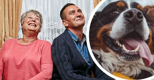 Goggledogs: Every Gogglebox dog sitting in on the TV chat