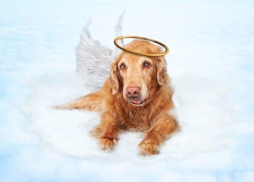 Gedichte & Trauersprüche für den Abschied vom verstorbenen Hund