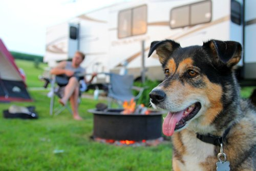 Camping mit Hund im Wohnmobil: Was gibt es zu beachten?