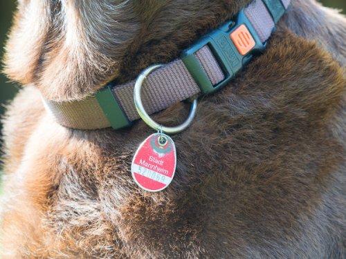 Hundemarke – Wissenswertes rund um die Steuermarke für Hunde