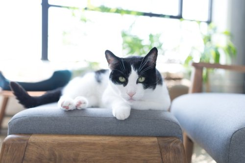Hey, Cat People—These Are the ONLY Indoor Plants You Should Consider | Hunker