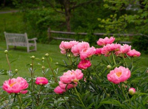 Full-Sun Plants: 20 Perennials for a Year-Round Garden   Hunker