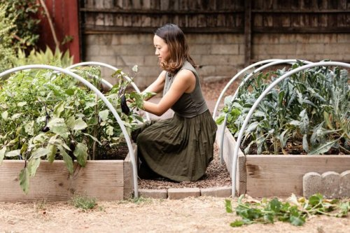 This Food Brand Will Pay You to Start a Garden at Home | Hunker