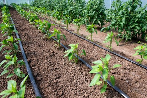 A Beginner's Guide to Drip Irrigation Systems | Hunker