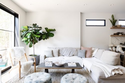 21 Types of Houseplants That Will Add Greenery to Your Home | Hunker