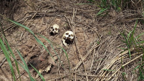 Will DRC minister Clément Kanku's alleged role in Kasai 'genocide' result in ICC probe?