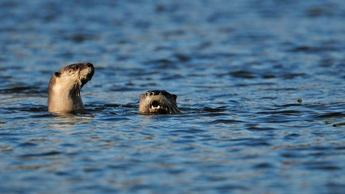 Otter attacks 12-year-old boy floating in Montana river, wildlife officials say