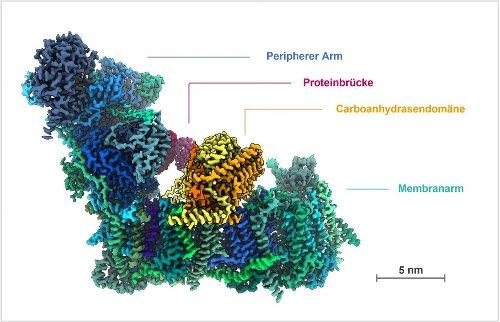 Bildgebende Darstellung eines Schlüsselenzyms im Pflanzenstoffwechsel erstmalig gelungen