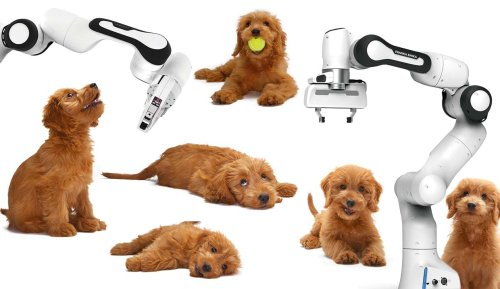 Cobots Act Like Puppies to Better Communicate with Humans