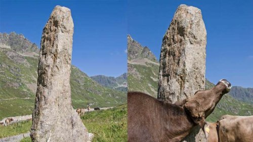 People Found Worshipping 'Ancient' Monolith That Turned Out To Be Butt-Scratching Post For Cows
