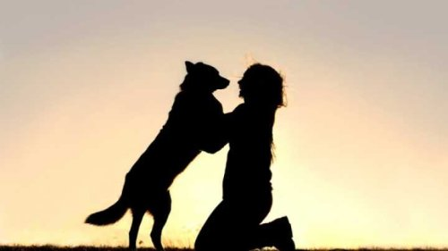 Heartbeats Of Dogs And Their Owners Sync-Up When They're Reunited