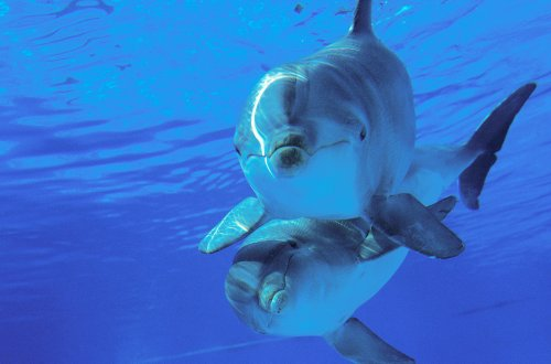 Human Whistling Languages Could Help Us Decode Dolphin Communication, Researchers Say