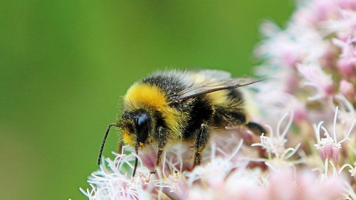 Wildbienen buddeln sich ein Zuhause