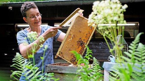 Wie Bienen den Honig machen