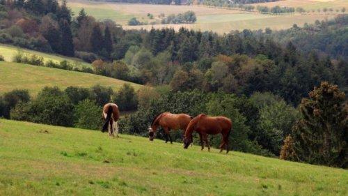 Durch Feld und Wald im Wispertal