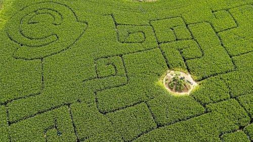 Maislabyrinthe in der Region – von Kevelaer bis zum Edersee