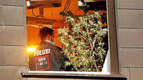 Immobilien-Verwalter baut riesige Drogen-Plantagen auf