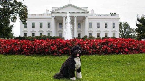 """Obamas Hund ist tot: Ex-""""First Dog"""" Bo starb an Krebs"""