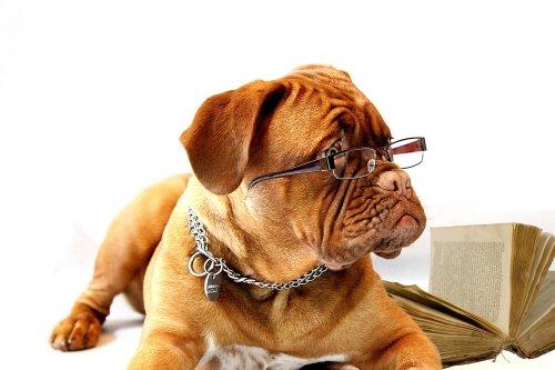 I disagi che solo chi porta gli occhiali può capire - Il Bullone