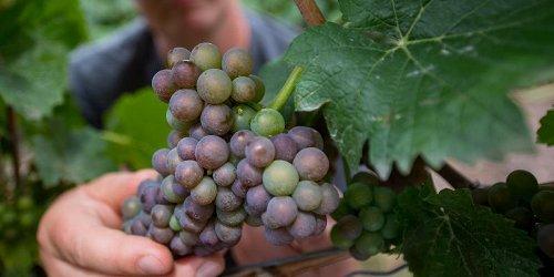 Da dove nasce la confusione sulla storia dell'acqua nel vino