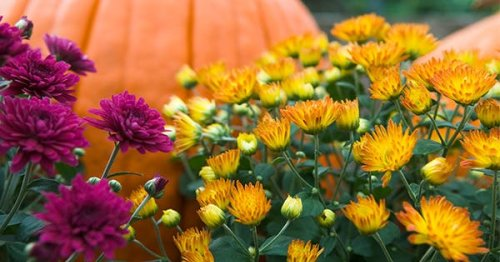 What to Plant in the Fall for the Lushest Garden You've Ever Seen