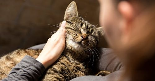 The 11 Most Affectionate Cat Breeds (Yes, They Do Exist)