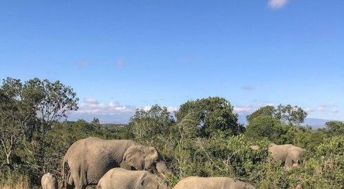 An Epic Solo Safari Through Kenya