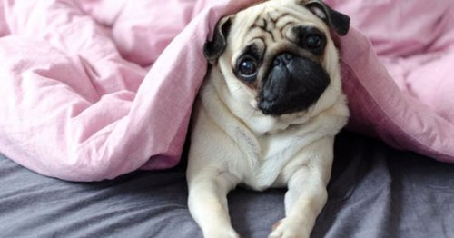 The 6 Best Dog Breeds for Introverts