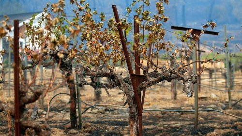 How Did 2020's Wildfires Impact California Wine?