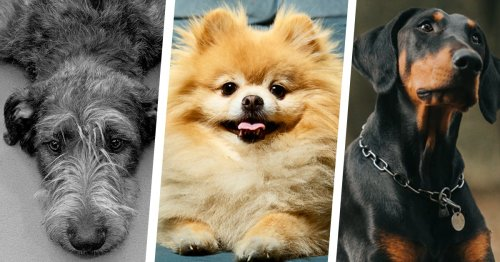 The Best Low-Maintenance Dogs for People with Super-Hectic Lives