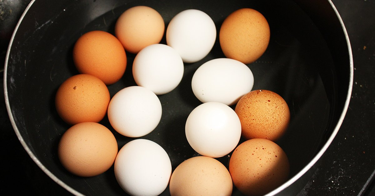 The Difference Between White And Brown Eggs