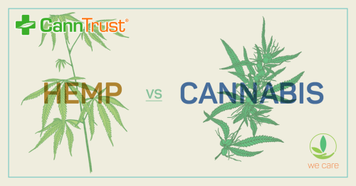 Charges laid in CannTrust scandal that rocked the Canadian cannabis industry | Leafly