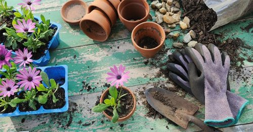 New to Gardening? Here Are 10 Must-Have Tools to Get Started