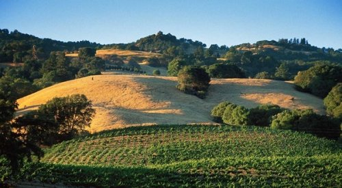 How to See California Where the Redwoods Meet the Vineyards