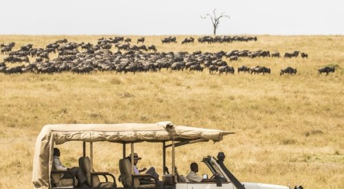 Why You Can (and Should) Take a Serengeti Safari Alone