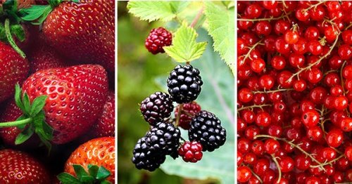 25 Different Types of Berries (and Why You Should Be Eating Each and Every One of Them)