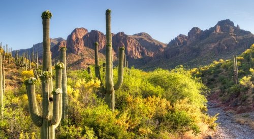 7 U.S. National Parks That Shine in the Spring