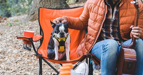 Camping with Dogs: All the Tips to Know, Where to Stay and the Genius Products You Need